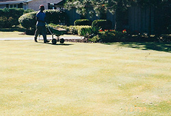 Other Service Specialities: Bent Lawn Install/Putting Green